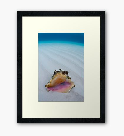 Shell Framed Print