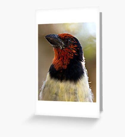 Black Collared Barbet Close Up Greeting Card