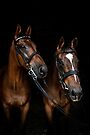 My Retired Racers by Candice O'Neill