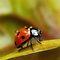 Ladybug macro & close-ups from the backyard