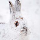 Winter Hare by Daniel  Parent
