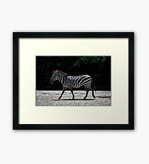 Zebra - Roger Williams Park Framed Print