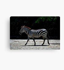 Zebra - Roger Williams Park Canvas Print