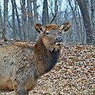 Ms Elk by Lanis Rossi