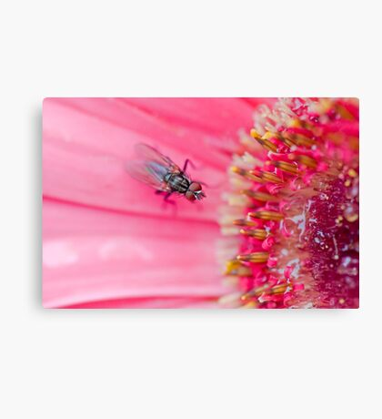 Fly to the Flower Canvas Print