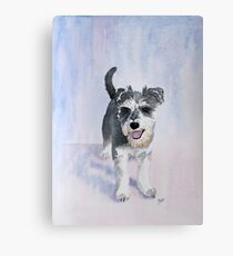 Dexter the Schnauzer Canvas Print