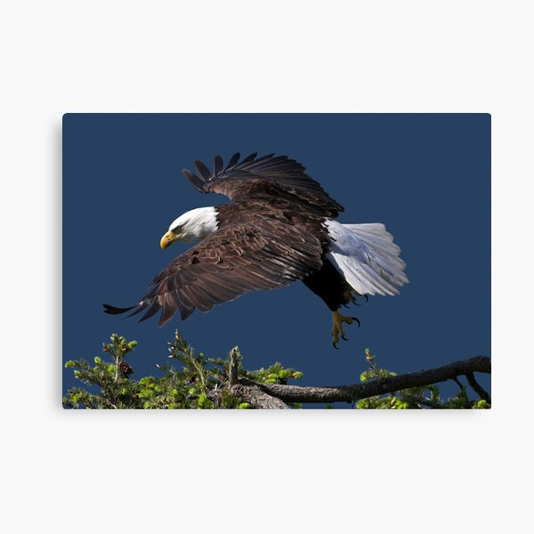 Graceful Manoeuvres Canvas Print