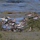 Redshank ..........maybe? by Sharon Perrett