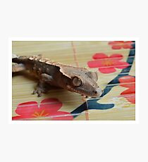 Crested Gecko and Flowers Photographic Print