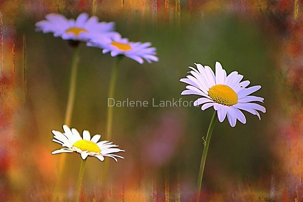Dreamy Daisies by Darlene Lankford Honeycutt