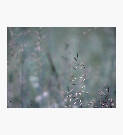 Summer grass 3 Photographic Print