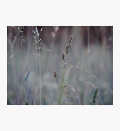 Summer grass 4 Photographic Print