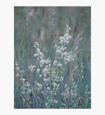 summer grass 2 Photographic Print