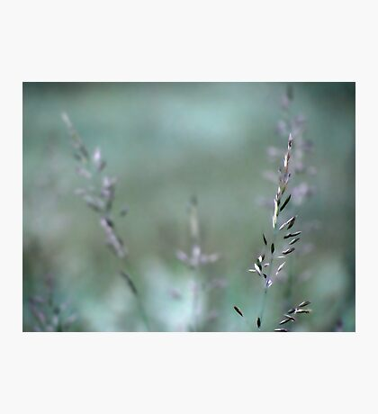 Summer grass 1 Photographic Print