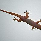 Gecko by gillyisme53