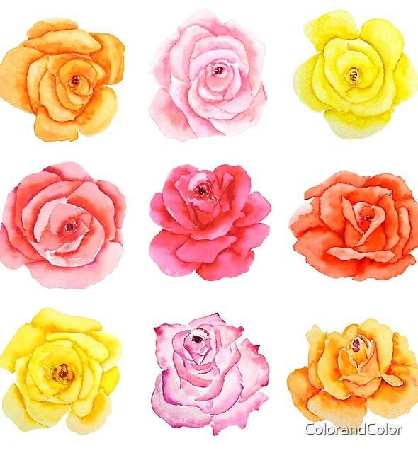 9 colorful watercolor pink red yellow orange roses  by ColorandColor