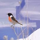 Stonechat on the Frozen River by Peter Taylor