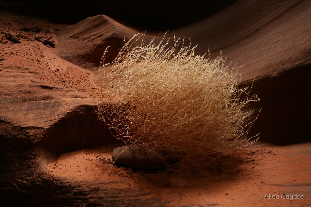 Lone Tumble Weed by Allen Gaydos
