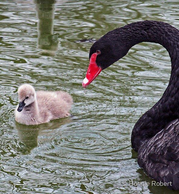 Momma Black Swan & her Cygnet by Bonnie Robert