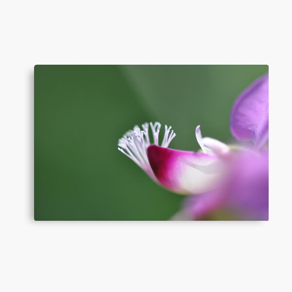 White Coral On A Flower Metal Print