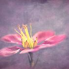 Pink on Purple by Gben