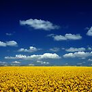 Blue and Yellow by LAURANCE RICHARDSON