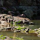 Devel's Canyon #3 by Vicki Pelham
