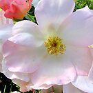 Beauty in Bloom by Betty Mackey