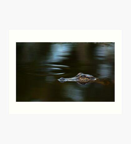 Alligator in the Lagoon Art Print