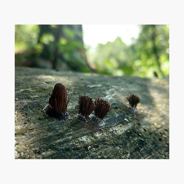 Chocolate tube slime mold Photographic Print