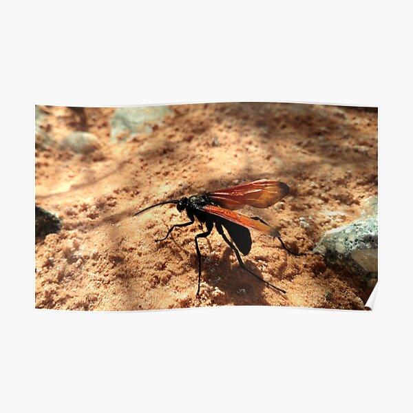Tarantula Hawk Wasp Poster