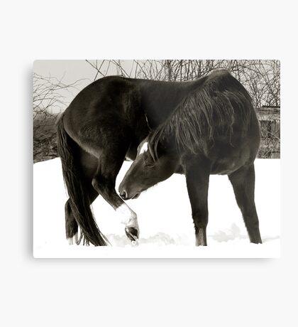 Horse Portraits #2 B&W Metal Print