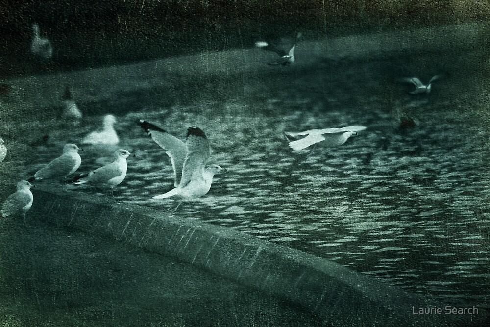 The Takeoff by Laurie Search