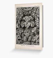 Kunstformen der Natur Haeckel Ernst 1899 1904 099 Greeting Card