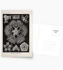 Kunstformen der Natur Haeckel Ernst 1899 1904 100 Postcards