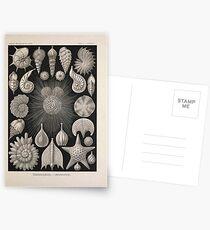 Kunstformen der Natur Haeckel Ernst 1899 1904 004 Postcards