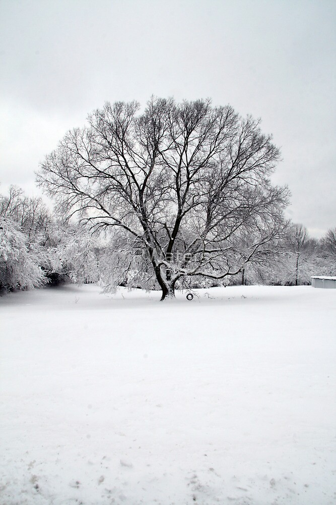 Tree of Winter Bliss (V) by RWaters