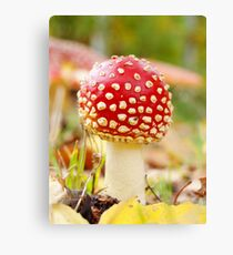 Toadstool mushroom Canvas Print