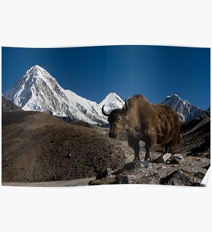 Wild Yak in the Himalayas Poster