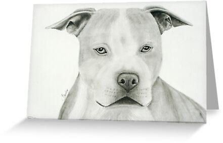 Buster by Susanne Correa