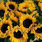 Sunflower Sensation by TonyCrehan
