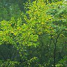 Gaitlinburg in the Fall by Rob Dodd