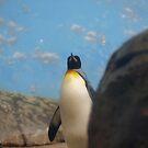 Penquin Proud by Rob Dodd