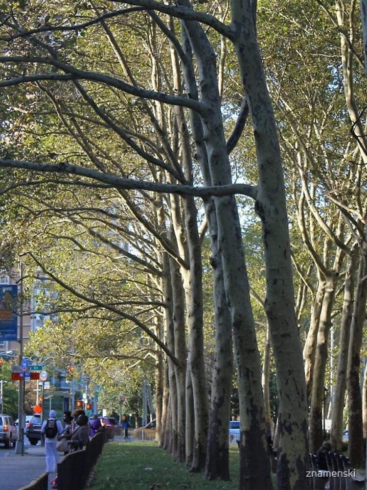 #tree, #landscape, #outdoors, #environment, #wood, #road, #leaf, #nature, #season by znamenski