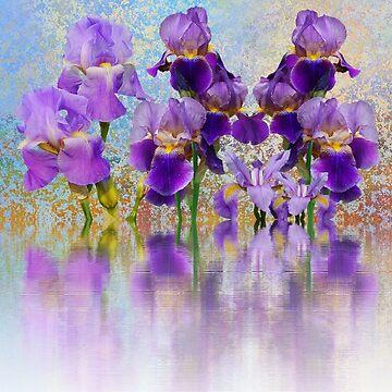 Iris Reflexionen von DavJen