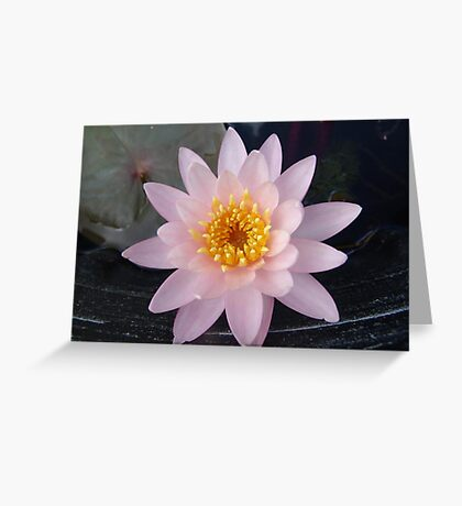 Pink Waterlily Greeting Card