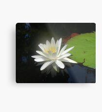 Waterlily with Damselfly Metal Print