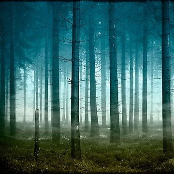 enter the forest by DyrkWyst