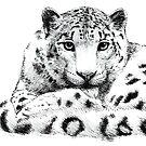 Snow Leopard Sketch by Vicky Pratt