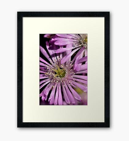 Mauve in the Spotlight Framed Print